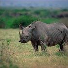 Relaciones simbióticas de los rinocerontes