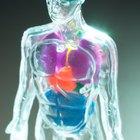 ¿Cuáles son los procesos de homeostasis?