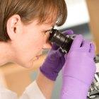 ¿Qué es la ampliación en un microscopio?