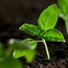 10 preguntas científicas sobre plantas