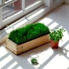 ¿Cómo afecta la luz azul en la fotosíntesis de una planta?