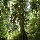 Actividades sobre los bosques templados