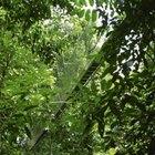 La adaptación de la vegetación en la selva tropical
