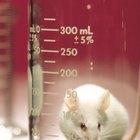 Los pros y los contras de la experimentación de productos en animales