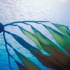 Los productores principales de los ecosistemas acuáticos