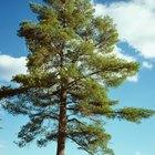 Relación de mutualismo entre un hongo y un árbol
