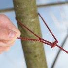 Cómo construir una trampa fácil para animales vivos