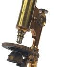 Microscopios en el siglo XIX