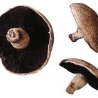 How to Stuff Portobello Mushrooms