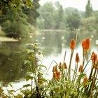 El ecosistema de un estanque de agua dulce
