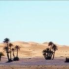 ¿Cuáles son las únicas características del desierto tropical?