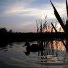 ¿Qué son los tres niveles de biodiversidad?