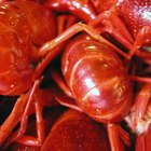 How to Peel & Devein Crawfish