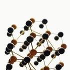 ¿Cuáles son los diez niveles de organización en la jerarquía de la vida?