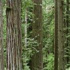 Factores abióticos en el ecosistema del bosque de secoyas