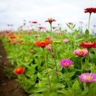 Factores que influyen en la respiración de las plantas