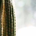 La transpiración en las plantas del desierto