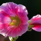 ¿En qué parte de la planta se produce el polen?