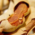 Uses of Tamarind Seeds