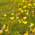 ¿Qué tipos de flores hay en el bioma de la tundra?