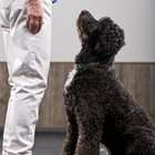 What Is the Annual Salary of a Service Dog Trainer?