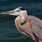 Animales que viven en estuarios