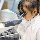 Erupciones cutáneas circulares normalmente mal diagnosticadas en los niños