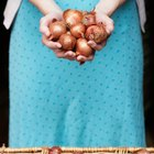 Make Pickled Shallots