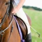 Cómo hacer un látigo para el caballo
