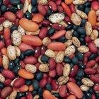 The Best Antioxidant Beans