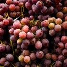 Cómo mantener las uvas frescas en el refrigerador