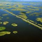 Similitudes entre los ecosistemas marinos y los de agua dulce