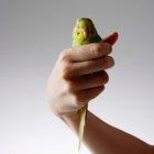 Cómo tratar una herida en el ala de un pájaro