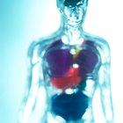 ¿Qué causa que la digestión se detenga teniendo comida en el estómago?