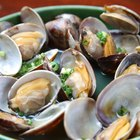 Can You Thaw & Refreeze Clams?