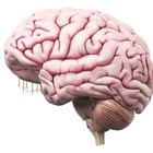Los salarios en neuropsicología
