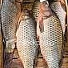 How to Cook A Carp