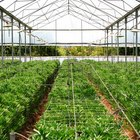How to Grow Greenhouse Vegetables for Profit