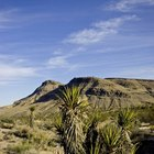 The Desert's Renewable Resources