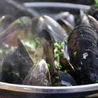 Can You Eat River Mussels?