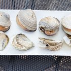 How to Grill Oysters and Clams