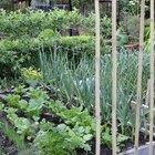 Benefits of Growing a Vegetable Garden