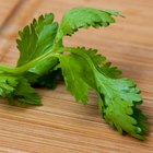 How to Cook with Cilantro