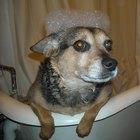 ¿Cómo usar champú de humanos en perros?