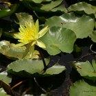 Hazlo tu mismo: Filtro biológico para estanque