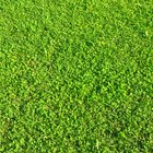 What are the Different Types of Lawn Grass?