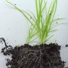 How Long Does It Take Grass Seed to Start Growing?