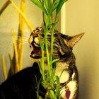 Natural cat repellents