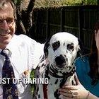Financial Help for Pet Surgery