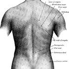 Back spasm symptoms
